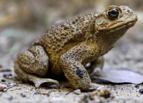 צפרדעים וקרפדות בבריכת נוי
