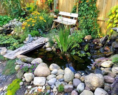 בניית בריכת דגים קטנה