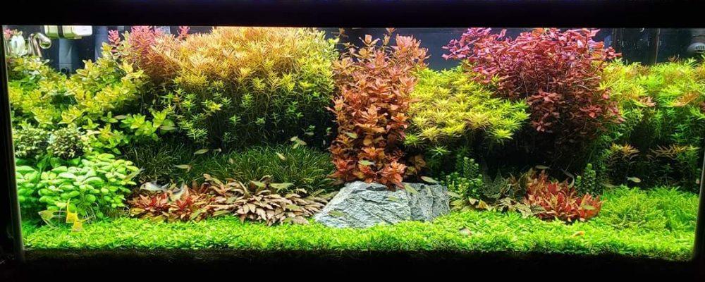 בניית אקווריום צמחייה טבעית
