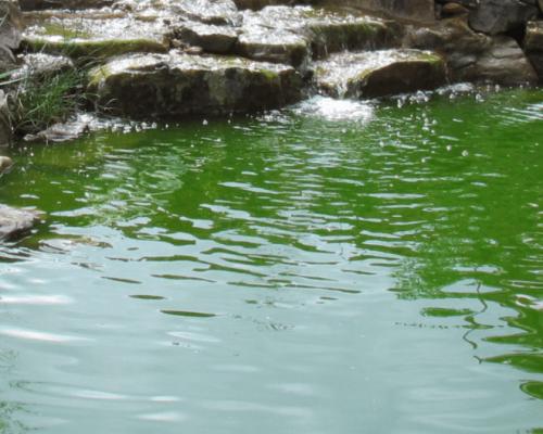 מערכת UV לבעיית מים עכורים בצבע ירוק בבבריכת הנוי