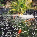 קצף בפני המים בבריכת דגים