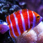 טיפול בנקודות לבנות על הדגים
